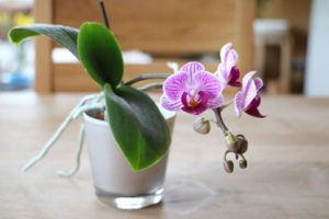 como-cultivar-orquideas-local