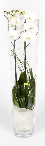 como-cultivar-orquideas-replantio