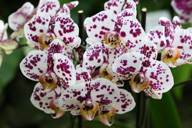orquideas-img01