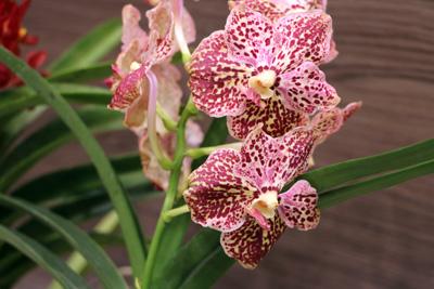 orquideas-img02