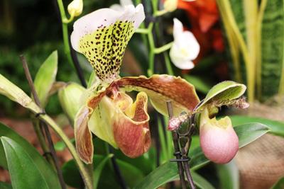 orquideas-img04